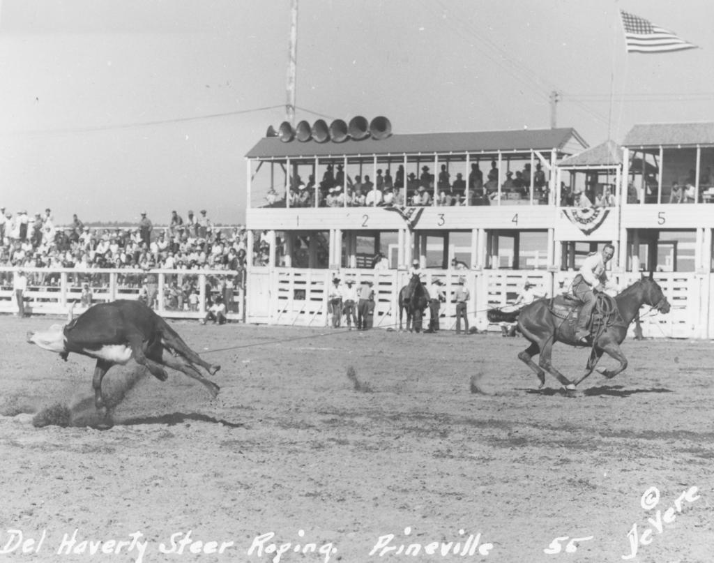 Del Haverty steer roping Crooked River RU 1955 DeVere Photo